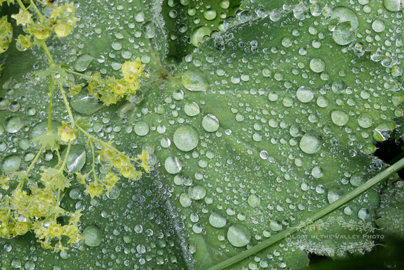Nature photography of spring raindrops gathered on a green leaf